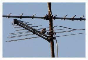 Antenna da digitale terrestre