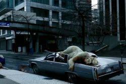 orsi morti