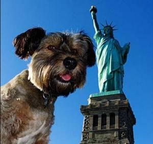 Oscar il cane