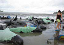 NEW ZEALAND WHALE RESCUE