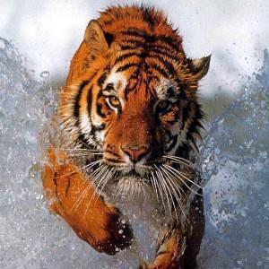 tigrett9