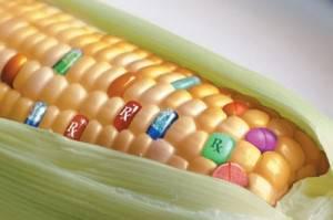 mais transgenico coldiretti 300x199 Agricoltori pro biotech sfidano il decreto