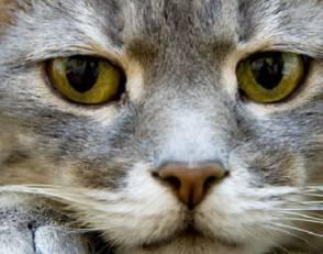rabbia-felina