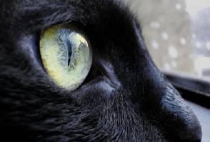 vista-gatto