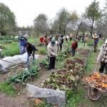 Coldiretti: c'è voglia di orto in Italia