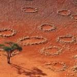 Cerchi delle Fate: svelato l'antico mistero della Namibia