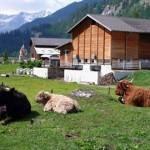 Cercansi agricoltori in Svizzera: salario minimo 2200 Euro mensili!