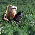 Lavoratori italiani sfruttati in Australia: la denuncia del Comitato Italiani all'Estero