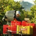 Istat: economia agricola in calo del 6,6% in un anno