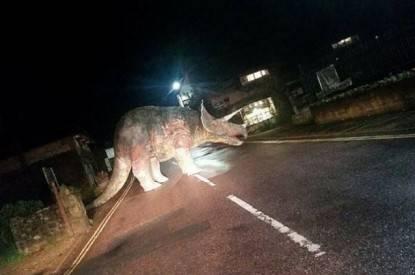 triceratopo in mezzo alla strada