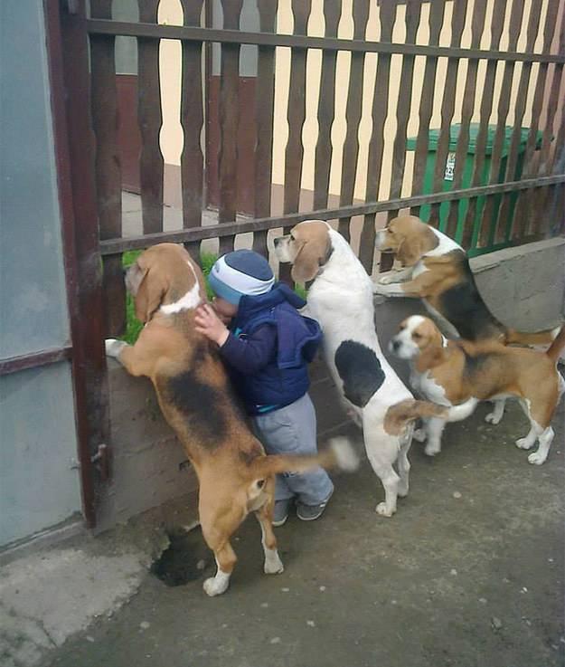 Bimbo con cani, in team
