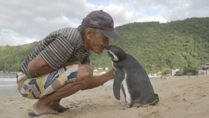 pinguino saluta il suo salvatore