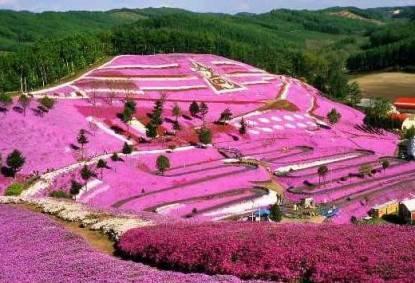 La collina rosa