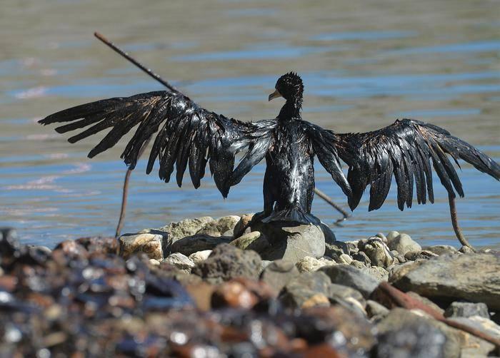 Valpolcevera, disastro ambientale; il greggio uccide pesci e uccelli