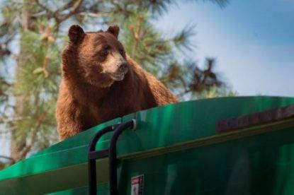 odd-bear-rides-garbage-truck