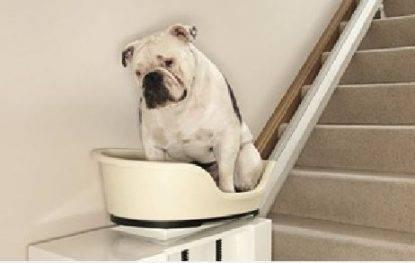 montascale-per-cani-obesi
