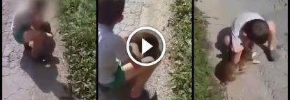 cucciolo-di-cane-picchiato