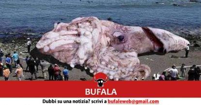 calamarogigante