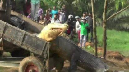 coccodrillo-gigante
