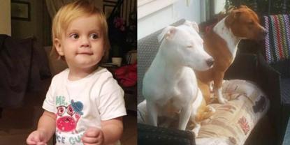 Brescia bimba di un anno azzannata da un cane: morta