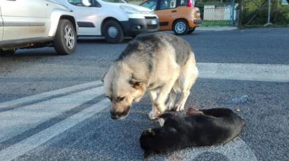 Un cane ha vegliato per ore il suo amico investito a Roma