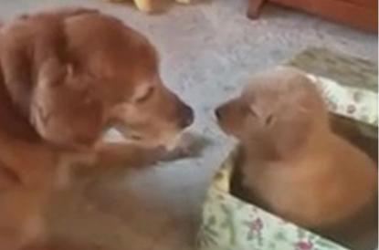 Catanzaro, cucciolo incastrato: salvato dai vigili del fuoco