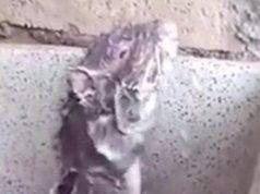 Il topolino che si fa la doccia come un essere umano