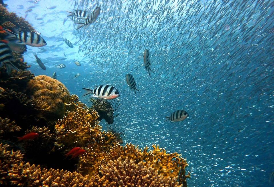 barriera-corallina-rischio