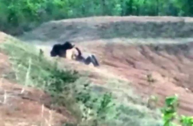 India, voleva fare un selfie con l'orso: sbranato