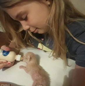 Bimba di 10 anni muore folgorata mentre cerca di salvare dei gattini