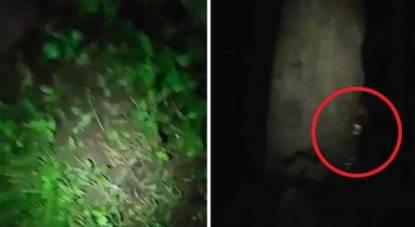 Avvistamento lupo mannaro nel bosco