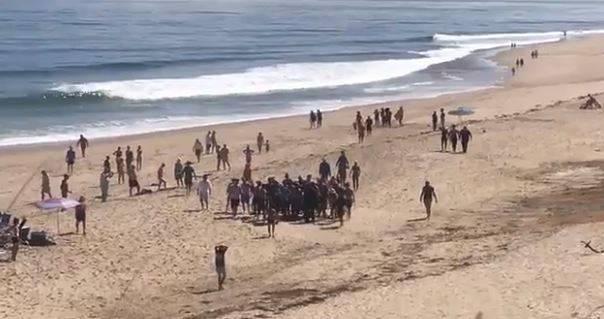 Usa: squalo attacca e uccide surfer davanti a Cape Cod