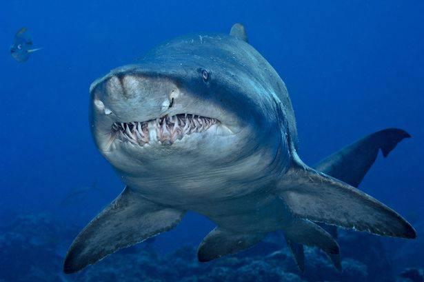 sub morso in testa da uno squalo