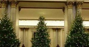 La Royal Family fa l'albero ma commette un errore