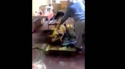 """Macellano maiale dentro un palazzo occupato e postano video su Fb """"Terzo mondo, il sindaco intervenga""""-min"""