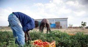 Arrestato sindacalista e ispettore del lavoro- facevano lavorare migranti in condizioni disumane -min