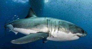 nel DNA dello squalo c'è la cura per il cancro?
