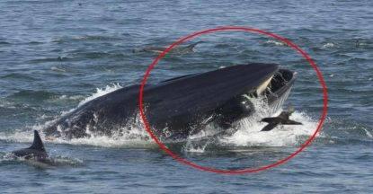 balena sub giona