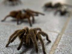 ragno cura disfunzione erettile