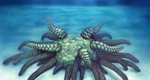 scoperto mostro marino che somigliava al mostro lovecraftiano