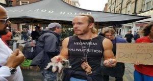 anti-vegano gatis scuola