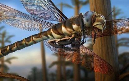 meganeura libellula gigante