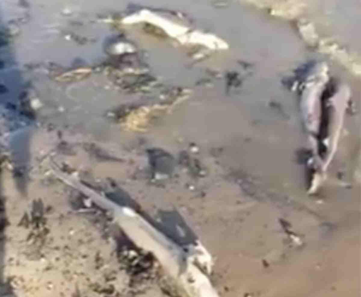 Ritrovate dozzine di squali spiaggiati e senza pinne