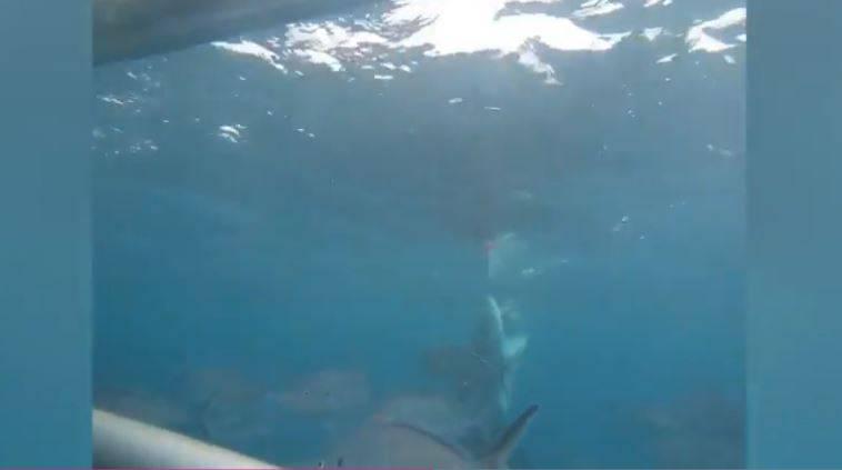 incontro squalo bianco
