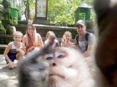 Scimmia mostra il dito medio ai turisti