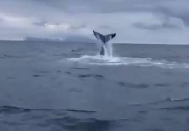 balena mar tirreno