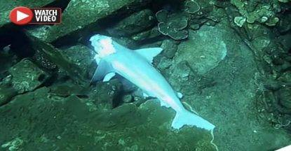 squalo senza testa
