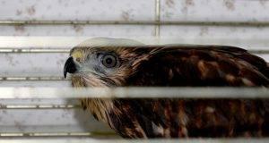 Ospedale animali abbandonati