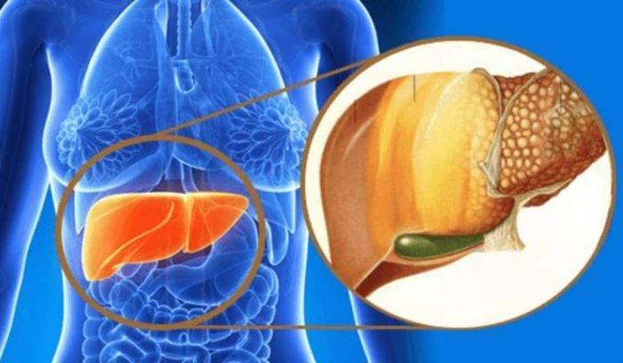 fegato-grasso-e1564400450255.jpg
