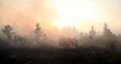 siberia incendi